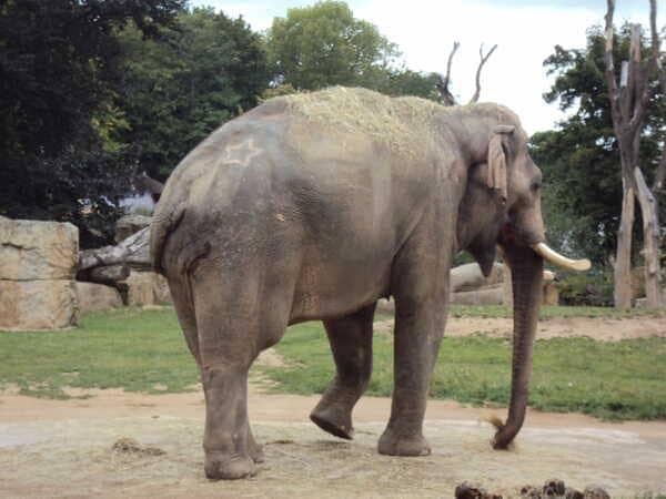 Зоопарк в Праге - слон
