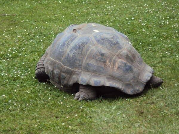 Зоопарк в Праге - Черепаха
